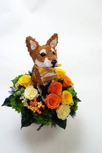 開店祝い 犬花