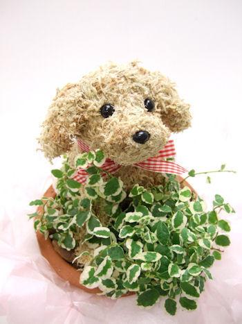 犬の水苔トピアリー鉢植えスタンダード