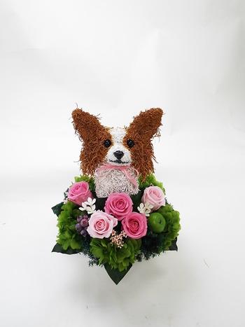 犬の保育園オープン記念 パピヨン