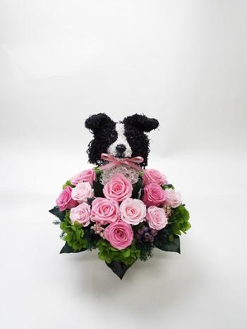 開店祝い プリザーブドフラワー犬 ボーダーコリー