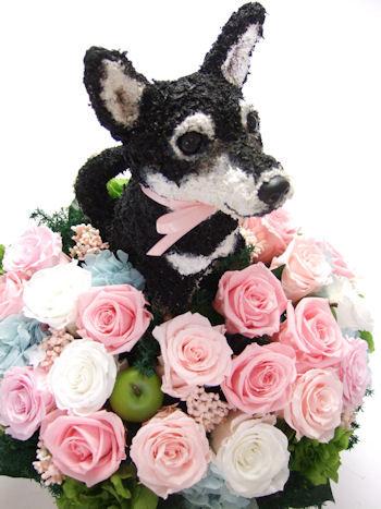 ウェルカムドッグ 黒柴犬