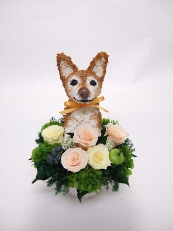 犬の花 お祝い