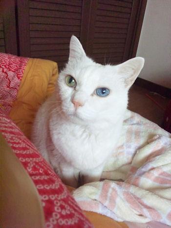 顔?目の色