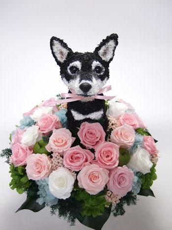 黒柴犬のオーダーメイドトピアリー
