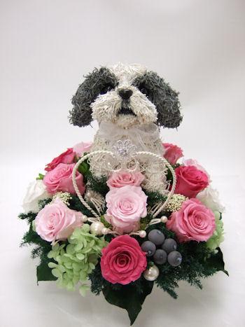 シーズー犬のリングピロー