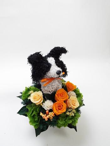 誕生日プレゼント 犬