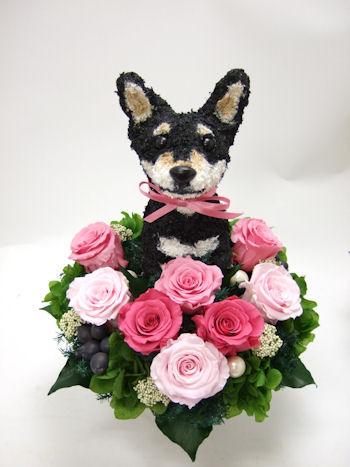 両親へのプレゼント黒柴犬