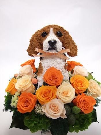 愛犬家結婚祝い