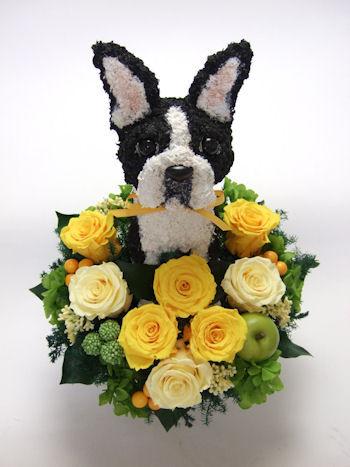開店祝い 犬