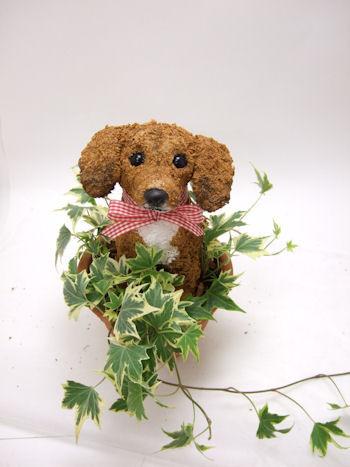 ミックス犬のトピアリー