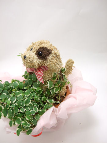 犬のトピアリー鉢植え