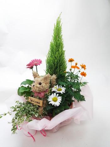開店祝い 寄せ植え花