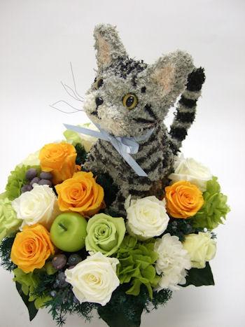 猫カフェ開店祝いのアメリカンショートヘア