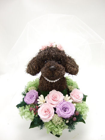ウェルカムドール 犬