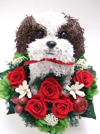 シーズー犬のウェルカムドッグ
