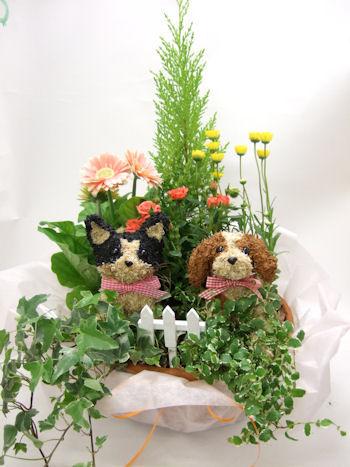 犬と猫の花ギフト