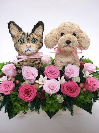 動物病院開院祝い 犬と猫