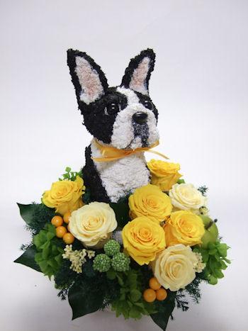 犬 花 お祝い