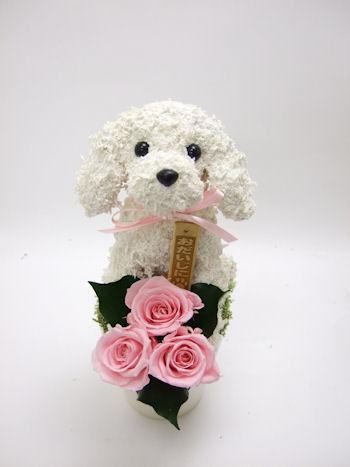 犬の花ギフト動物病院開院祝い