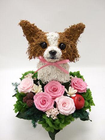 誕生日プレゼント チワワ犬