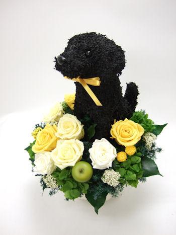 犬のウェルカムドール