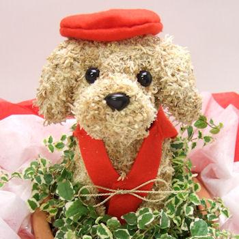 犬好きの人の還暦祝いの贈り物