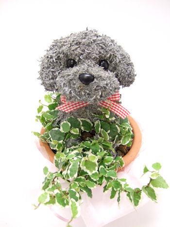 犬のトピアリー