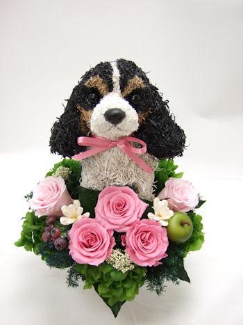 キャバリア犬のウェルカムドール