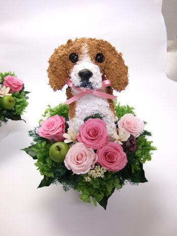 ウェルカムドッグ ビーグル犬