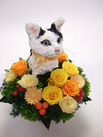 猫好き楽屋見舞い花