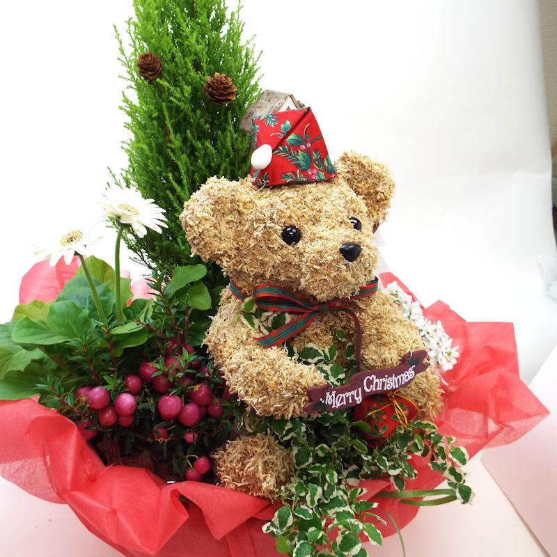 くまのトピアリー クリスマス寄せ植え