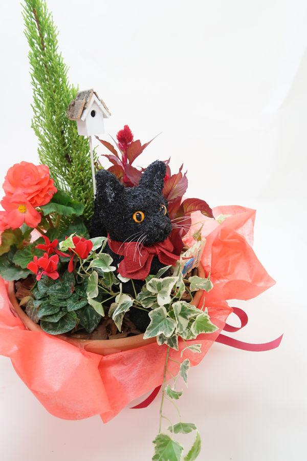 猫寄せ植え