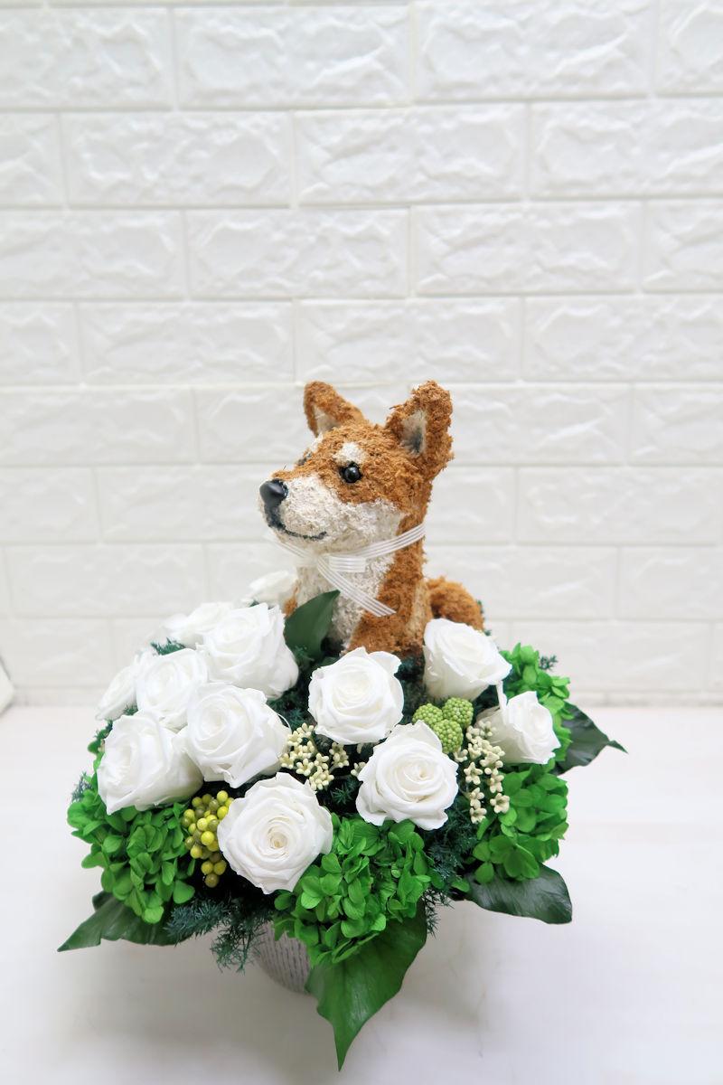 柴犬プリザーブドフラワーアレンジ