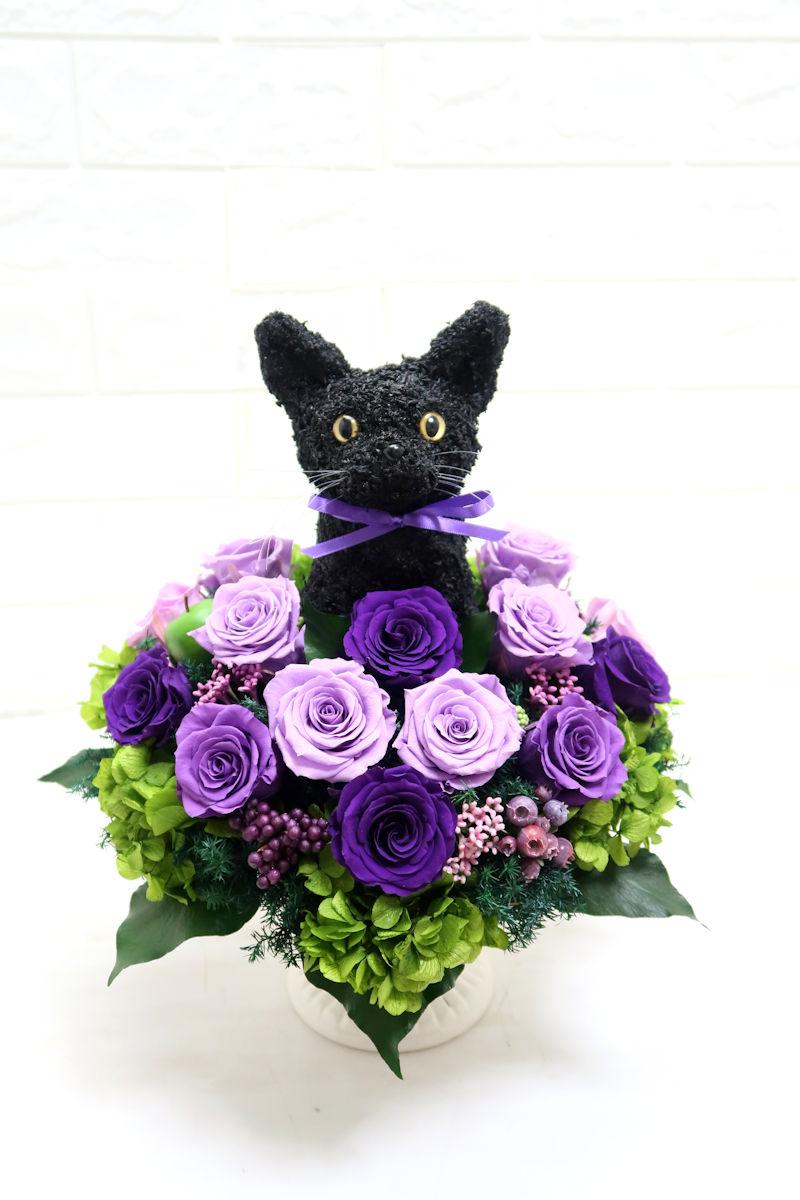 アニマルフラワー 猫