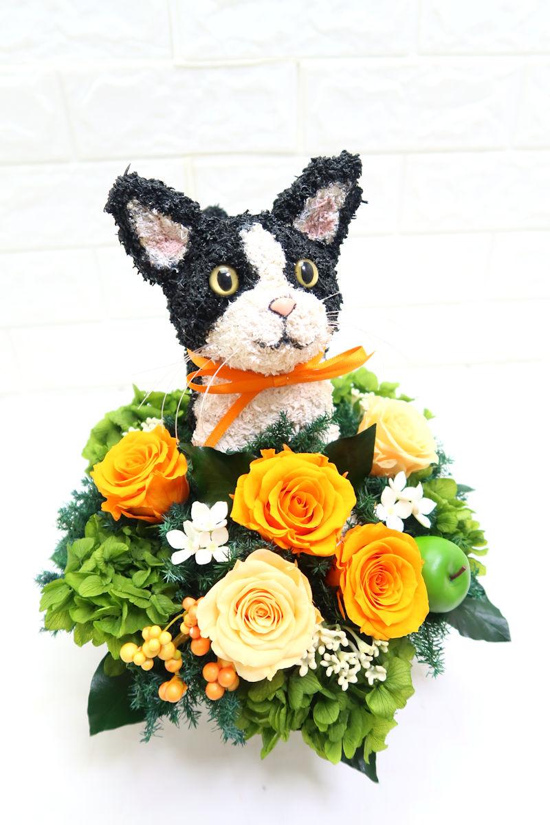 猫花プレゼント