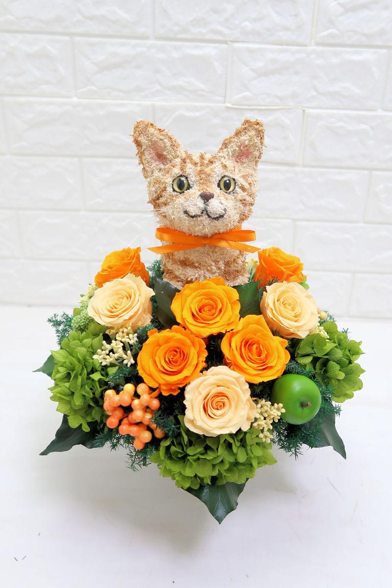 猫の病院開院祝い