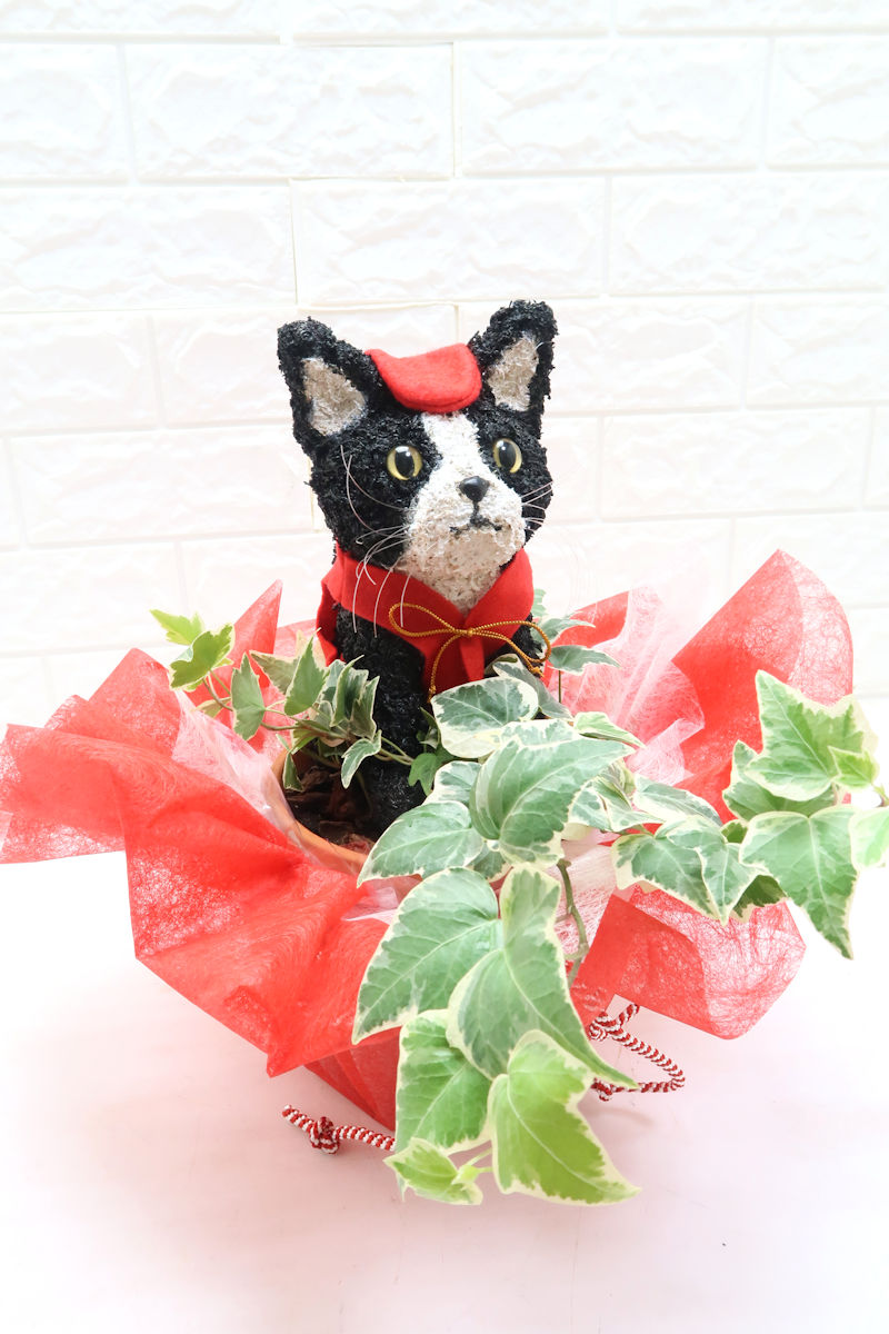 還暦祝いハチワレ猫好き