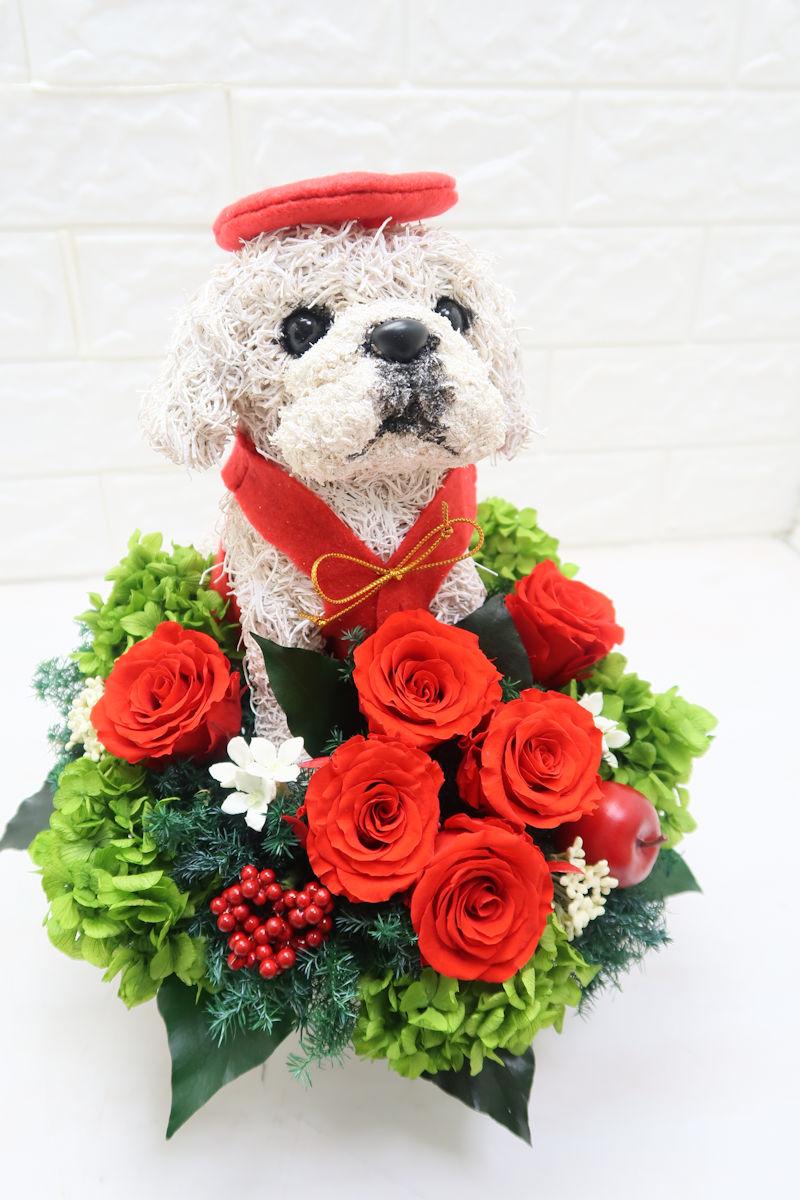 還暦祝い 愛犬家 ペキニーズ