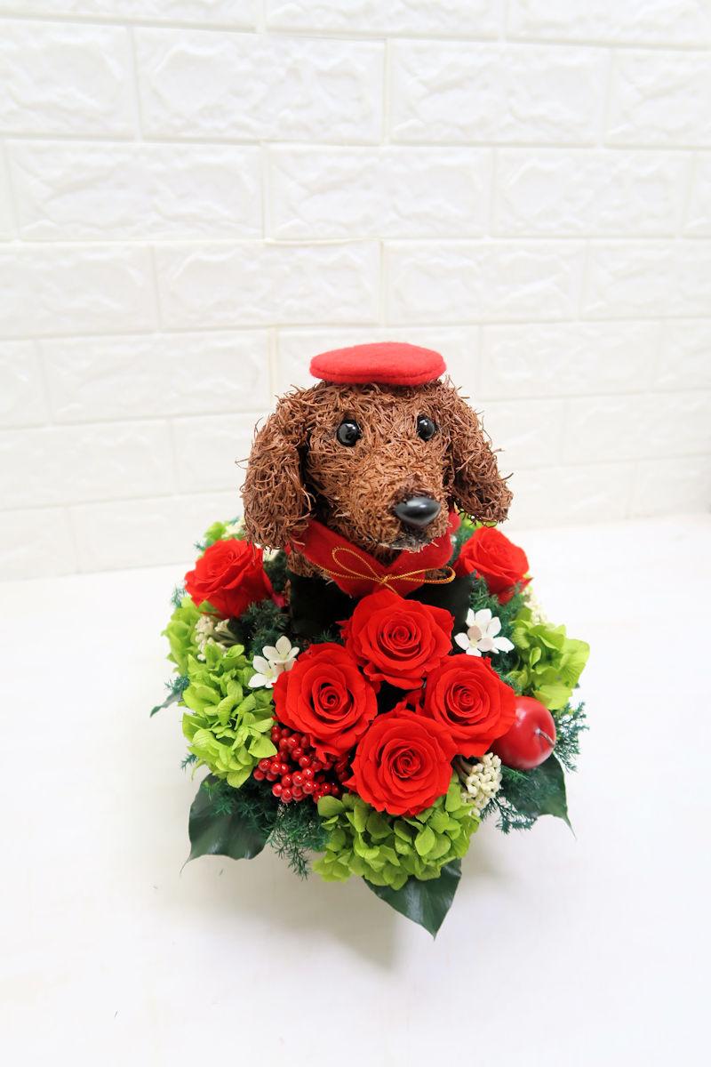 犬好き還暦祝い