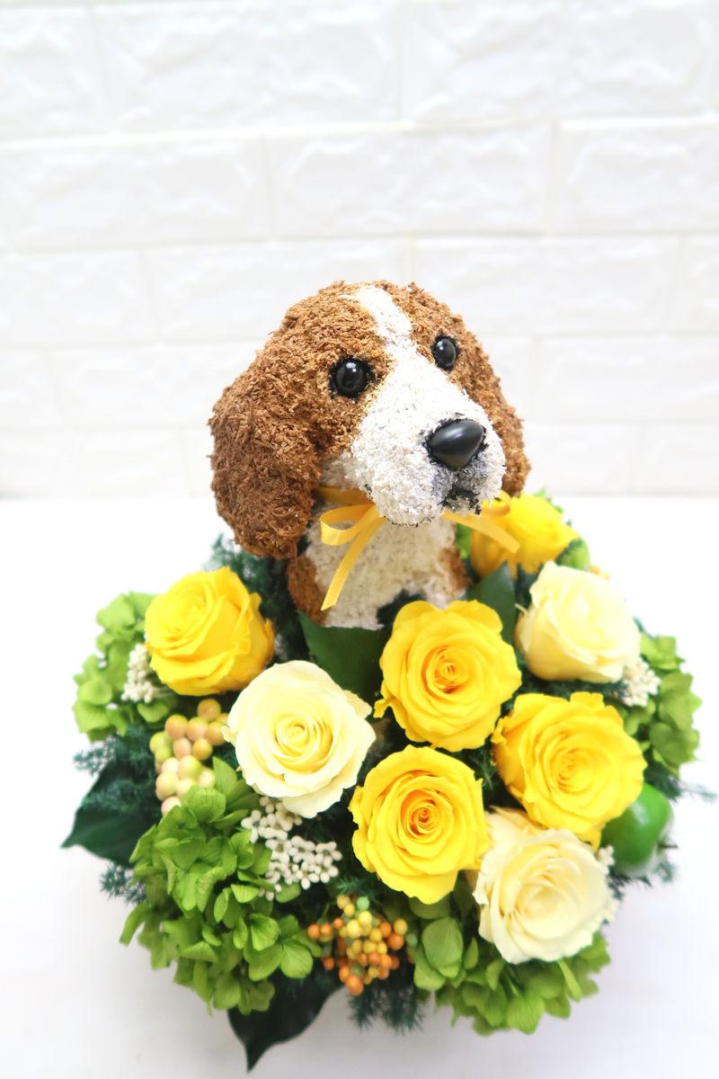 還暦祝い ビーグル犬花